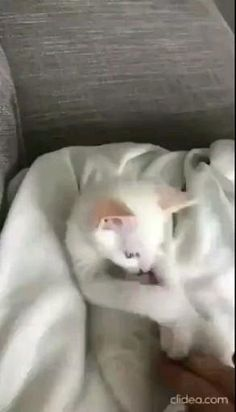 Cute Baby Cats, Funny Cute Cats, Cute Little Animals, Cute Cats And Kittens, Cute Funny Animals, Kittens Cutest, Big Cats, Cute Animal Videos, Funny Animal Pictures