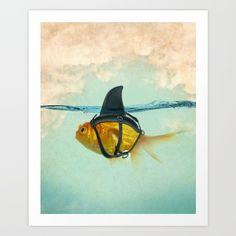 "$33.00 Brilliant DISGUISE by Vin Zzep  goldfish disguised as a shark. teal, aqua, orange. funny, amusing...  Gallery quality Giclée print on natural white, matte, ultra smooth, 100% cotton rag, acid and lignin free archival paper using Epson K3 archival inks. Custom trimmed with 1"" border for framing. #art #society6 #shopping #home #decor #humor #funny #comedy #laughs"