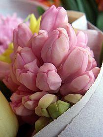 tulipany na Stylowi.pl
