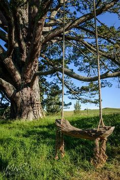 Farm Fresh Living ~ country swing and massive tree climbing tree with ladder