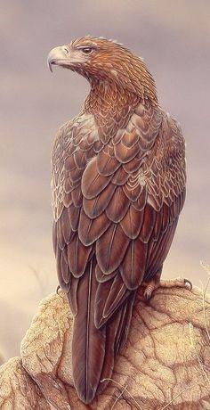 Águila audaz - Wedge-tailed eagle - Keilschwanzadler - Aigle d& Pretty Birds, Love Birds, Beautiful Birds, Animals Beautiful, Cute Animals, Wedge Tailed Eagle, Wallpaper Animes, Photo Animaliere, Eagle Art