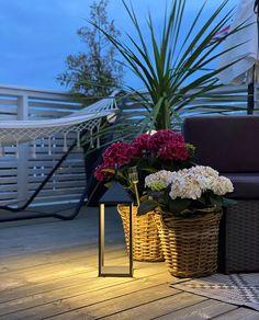8177-Nowodvorski-Picnic-LED-Lanterne-Grafitt_trinemaris_m3 Plants, Design, Lily, Plant, Planets