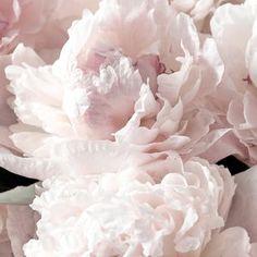 Tender Peony Wallpaper floral wallcovering dramatic floral | Etsy Kids Wallpaper, Fabric Wallpaper, Jungle Balloons, Playroom Decor, Bedroom Decor, Wall Decor, Kids Wall Murals, White Peonies, Traditional Wallpaper