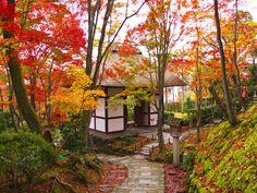 京都 Kyoto   小倉山 常寂光寺。建物は仁王門。新緑の季節も美しい場所。