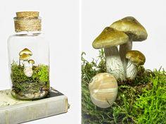 Lovely Moss Terrarium with Mushrooms