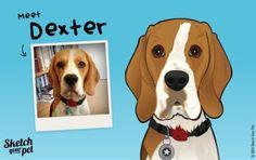 Meet Dexter the beagle #petportrait #art #illustration #petsketch #dogs #beagle