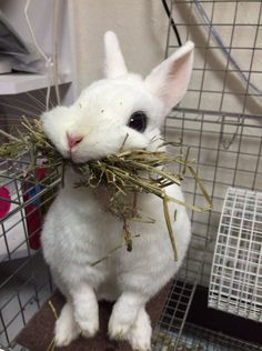 haha that bunny is so cute! honestly though, the waitresses always seem to come around when i have a mouth full of food. Cute Baby Bunnies, Funny Bunnies, Cute Funny Animals, Funny Animal Pictures, Cute Baby Animals, Best Funny Pictures, Animals And Pets, Cute Babies, Funny Pics