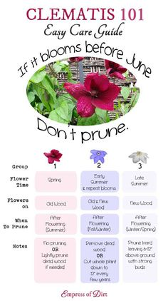 Clematis plants - Clematis 101 Easy Care Guide Clematis is one of the mostloved garden vines yet it's not always easy to know when to prune your vines or leave them alone This will help you determine which type of Prune, Flower Garden, Planting Flowers, Plants, Garden Types, Garden Shrubs, Clematis Plants, Garden Vines, Gardening Tips