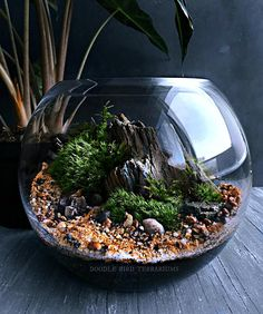 The living landscape terrarium features a miniature mountain scene surrounded by a lush forest of contrasting mosses. The mountain scene is created using large pieces of genuine petrified wood (fossilized remains of wood and/or bark in which all of the organic matter is replaced by
