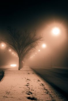 City Fog 1(Grant Park, Winnipeg, Manitoba)   Christopher Janzen