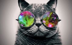 ♥COOL♥ 83 the first cat in space was a french cat named felicette a k a astrocat ...