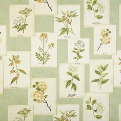 Digital Collage Sheets Vintage Botanical Floral Prints - Clipart, Illustrations and Labels Stuart Graham, Prestigious Textiles, Create Collage, Blinds Design, Made To Measure Curtains, Modern Prints, Digital Collage, Soft Furnishings, Shades Of Green