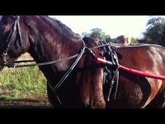 Lucky Pony Saddle Club | Weil uns Pferde Spaß machen!