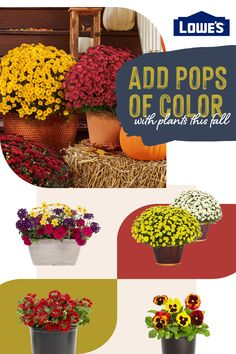 Fall doesn't mean the blooming ends! Enjoy color in planters and garden beds this season.