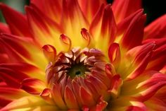 Flower - Orange and Yellow