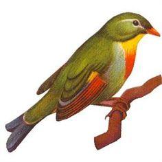 Free Vintage Bird Image- www.photojewelrymaking.com