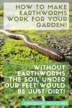 How To Make Earthworms Work For Your Garden! #gardeningtips #gardening #organicgardening #permaculture #homesteadgarden #soil