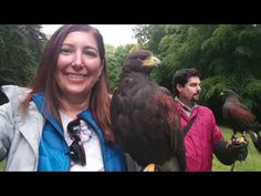 (2) 8 I walked a hawk at Ashford Castle in Ireland - YouTube