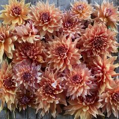 """Sherwoods Peach - Details - Flower Type: Dinnerplate Height: 5' Site: Full SunDays to Maturity: 80-100 days Plant Spacing: 12-18"""" Pinch: When plants are 12"""" tall"""