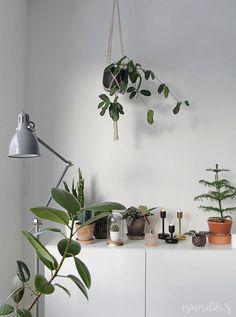 Viherkasvit Sisustuksessa - Esmeralda's
