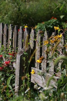 I section of weathered cedar fence in the middle of the butterfly garden. Garden Art, Rustic Gardens, Old Fences, Garden Gates, Cottage Garden, Country Gardening, Fence, Dream Garden, Flowers