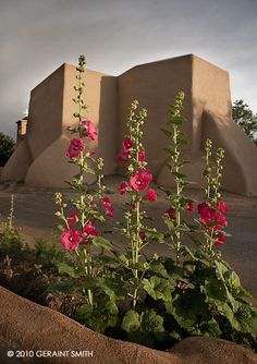 Rachos de Taos, hollyhocks by Geraint Smith Photography http://www.geraintsmith.com/potd/pages/archive/july_10/july_10_10.html