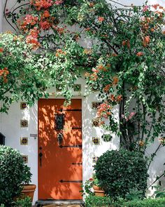 Orange blooms and orange door