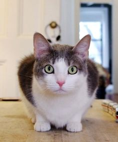 10 Cats Reveal What NYC Is Really Like #refinery29  http://www.refinery29.com/felines-of-new-york-funny-cat-tumblr