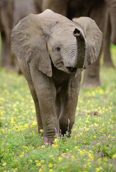 Wildlife Photography by Shem Campion
