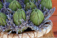 The Croatians fold the stems over the lavender flowers, making a nice sash and flower basket arrangement