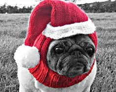 Santa beanie pug