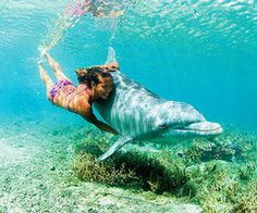 Swimming with Dolphins! http://universal-wellness.blogspot.com/2015/02/baring-my-soul-and-planting-dream.html