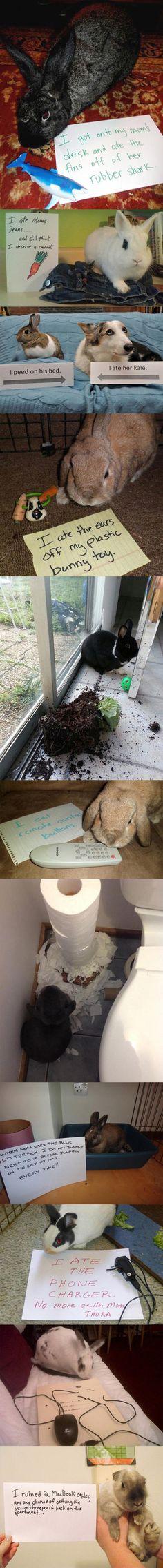 Diese Kaninchen sollten sich schämen
