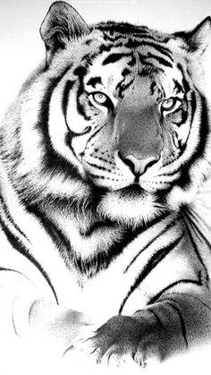 Download Wallpaper ID 80289 - Desktop Nexus Animals