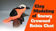 Clay Modeling of Snowy Crowned Robin Chat