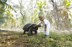 Four Seasons Resort Seychelles at Desroches Island guests are encouraged to visit the Tortoise Sanctuary to learn about their habits and way of life. Seychelles Resorts, Les Seychelles, Seychelles Honeymoons, Seychelles Islands, Four Seasons Hotel, Mauritius, Vietnam, Bali, Thailand