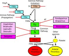 DVT: A New Era in Anticoagulant Therapy: Arteriosclerosis, Thrombosis, and Vascular Biology