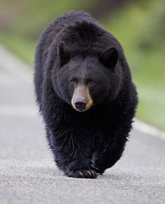 bear.jpg (625×768)