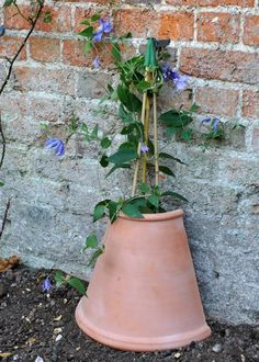 garden care tips Clematis Tip . create a cool area for roots by adding a . - Clematis tip . create a cool area for roots by using half a pot as protection - Clematis Care, Clematis Trellis, Clematis Plants, Garden Care, Outdoor Plants, Outdoor Gardens, Pot Jardin, Container Gardening Vegetables, Growing Plants