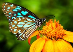 Year Membership to the  Butterfly House and Marine Cove
