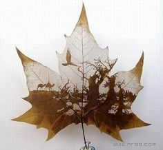 This unknow artist creates pictures on leaves. One would wonder how many hours it takes and how much patience and time it takes to do this on such a delicate canvas.