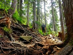 St Marks Summit trail - root trail in Cypress Provincial Park, Vancouver Vancouver Bc Canada, British Columbia, Trail, Explore, Park, Nature, Parks, Naturaleza, Exploring