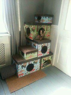 Gimnasio gatos con cajas