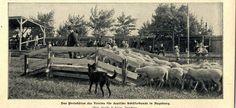 Preishüten d.Vereines f.Deutsche Schäferhunde in Augsburg 1902