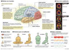 Ocho semanas de meditación bastan para cambiar el cerebro.