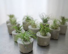Concrete Air Plant Wedding Favors -  Eco-Friendly Party Favors - Sustainable gifts
