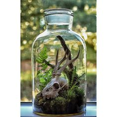 Taxidermy Put found animal bones into closed living terrarium and let the plants grow around them.