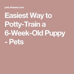 Easiest Way to Potty-Train a 6-Week-Old Puppy - Pets