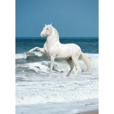 HORSES.....HORSES....& MORE HORSES / Andalusian Stallion, a... ❤ liked on Polyvore