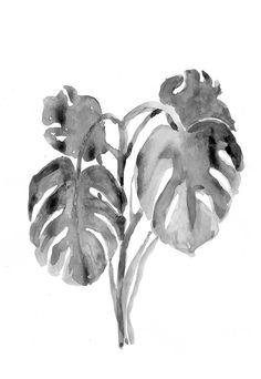 Väggväxter